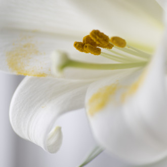 Portfolio : Flora & Fauna